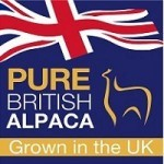 pure-british-alpaca